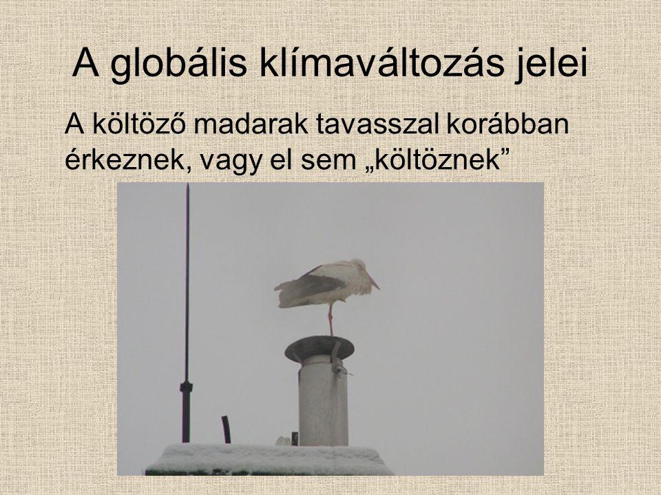 """A globális klímaváltozás jelei A költöző madarak tavasszal korábban érkeznek, vagy el sem """"költöznek"""