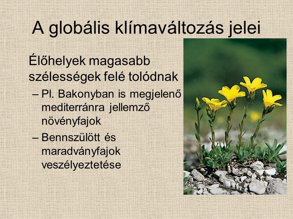 A globális klímaváltozás jelei Élőhelyek magasabb szélességek felé tolódnak –Pl. Bakonyban is megjelenő mediterránra jellemző növényfajok –Bennszülött