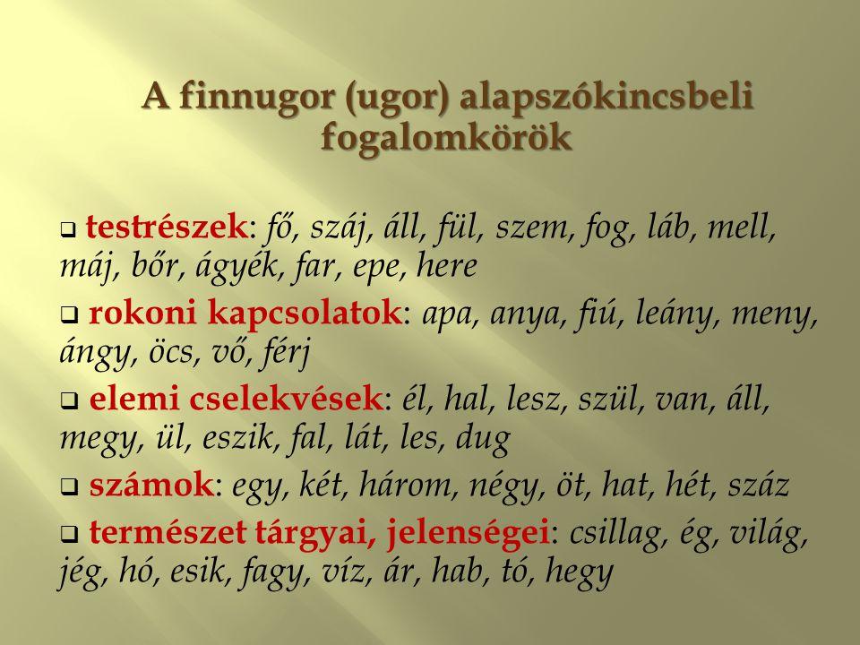 A finnugor (ugor) alapszókincsbeli fogalomkörök  testrészek : fő, száj, áll, fül, szem, fog, láb, mell, máj, bőr, ágyék, far, epe, here  rokoni kapc