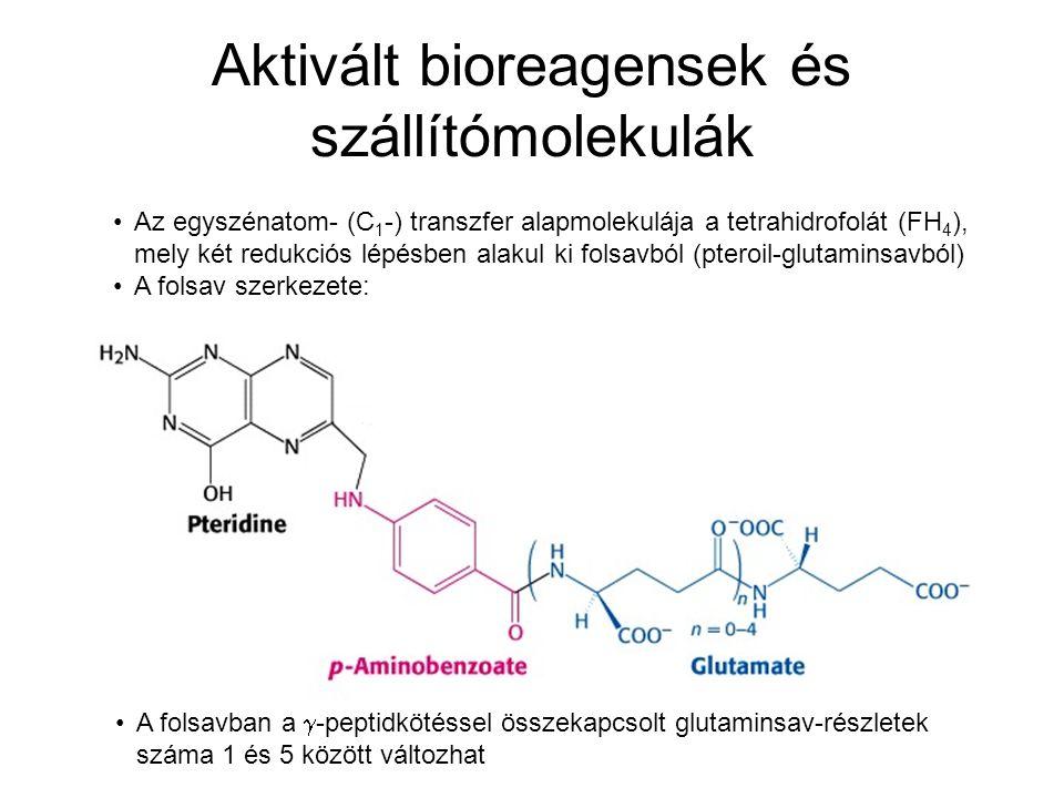 Aktivált bioreagensek és szállítómolekulák Az egyszénatom- (C 1 -) transzfer alapmolekulája a tetrahidrofolát (FH 4 ), mely két redukciós lépésben ala