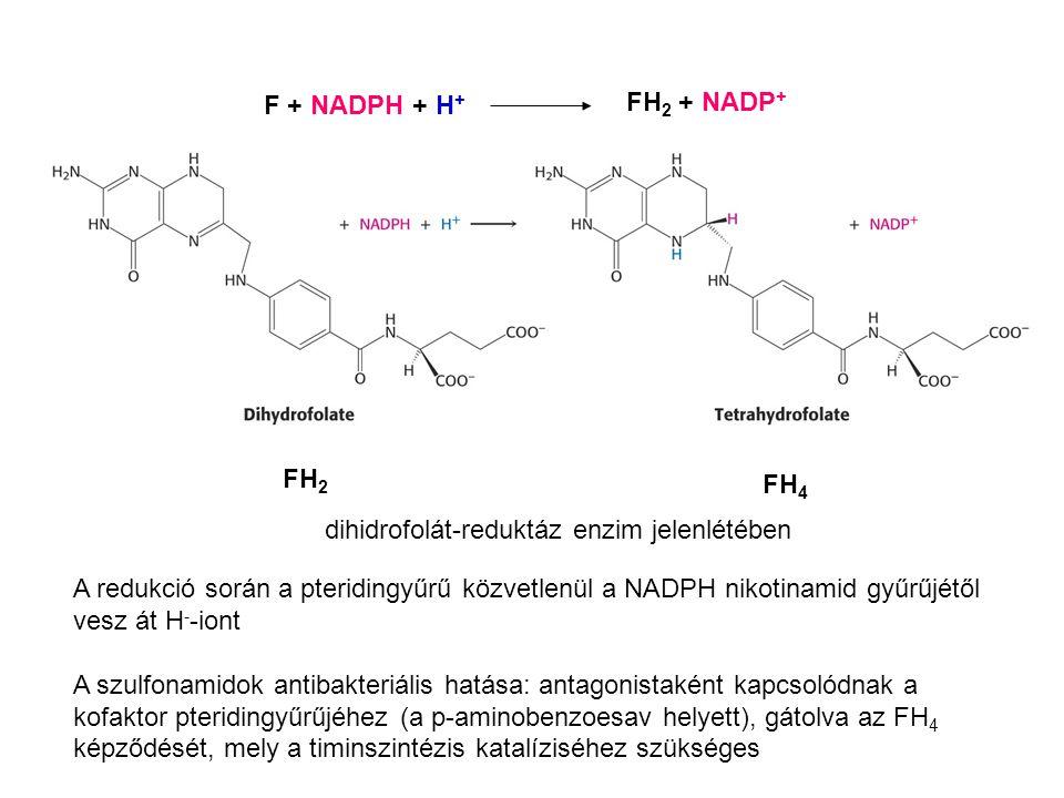 FH 2 FH 4 F + NADPH + H + FH 2 + NADP + dihidrofolát-reduktáz enzim jelenlétében A redukció során a pteridingyűrű közvetlenül a NADPH nikotinamid gyűr