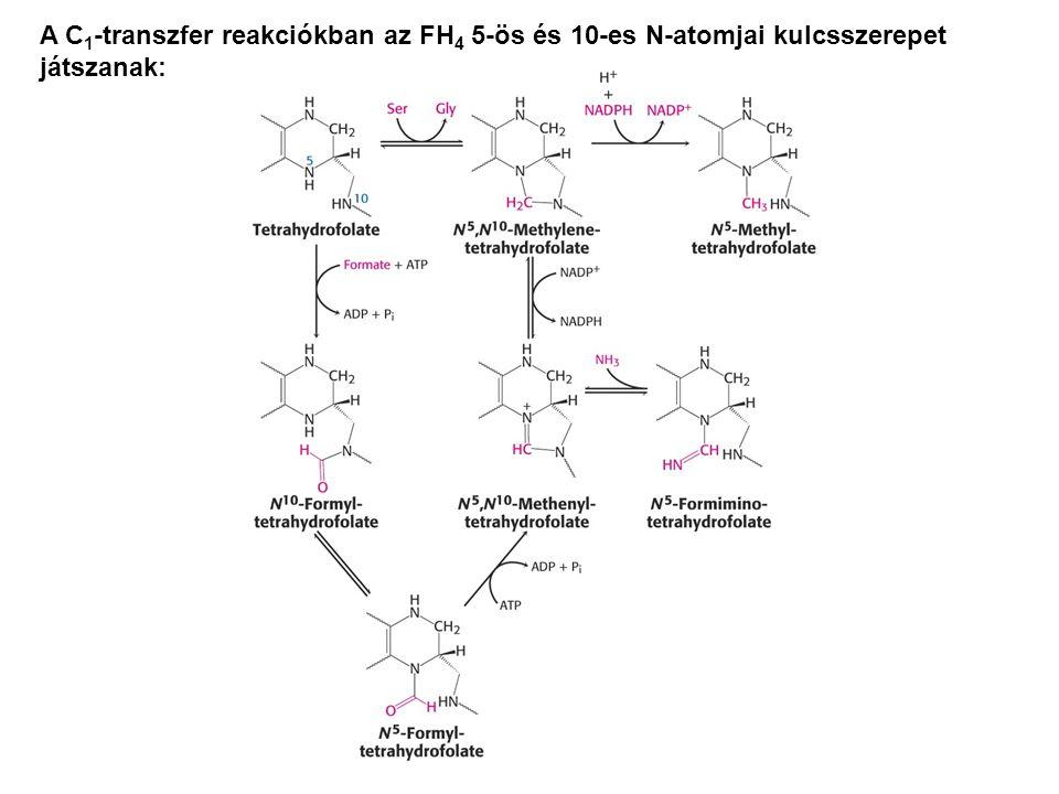 A C 1 -transzfer reakciókban az FH 4 5-ös és 10-es N-atomjai kulcsszerepet játszanak: