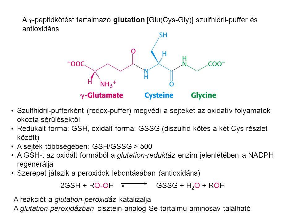 A  -peptidkötést tartalmazó glutation [Glu(Cys-Gly)] szulfhidril-puffer és antioxidáns 2GSH + RO-OHGSSG + H 2 O + ROH Szulfhidril-pufferként (redox-p