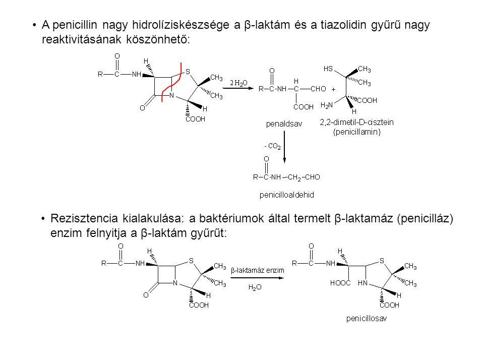 A penicillin nagy hidrolíziskészsége a β-laktám és a tiazolidin gyűrű nagy reaktivitásának köszönhető: Rezisztencia kialakulása: a baktériumok által t