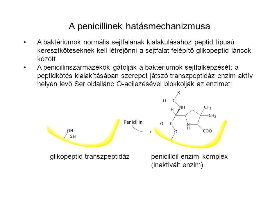 A penicillinek hatásmechanizmusa A baktériumok normális sejtfalának kialakulásához peptid típusú keresztkötéseknek kell létrejönni a sejtfalat felépít
