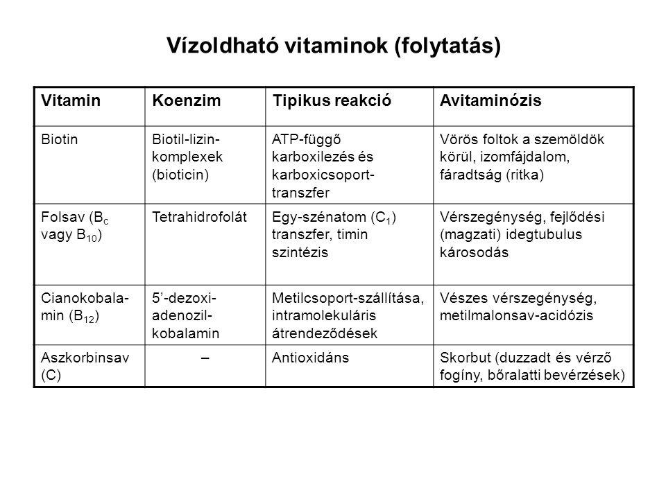 Vízoldható vitaminok (folytatás) VitaminKoenzimTipikus reakcióAvitaminózis BiotinBiotil-lizin- komplexek (bioticin) ATP-függő karboxilezés és karboxic