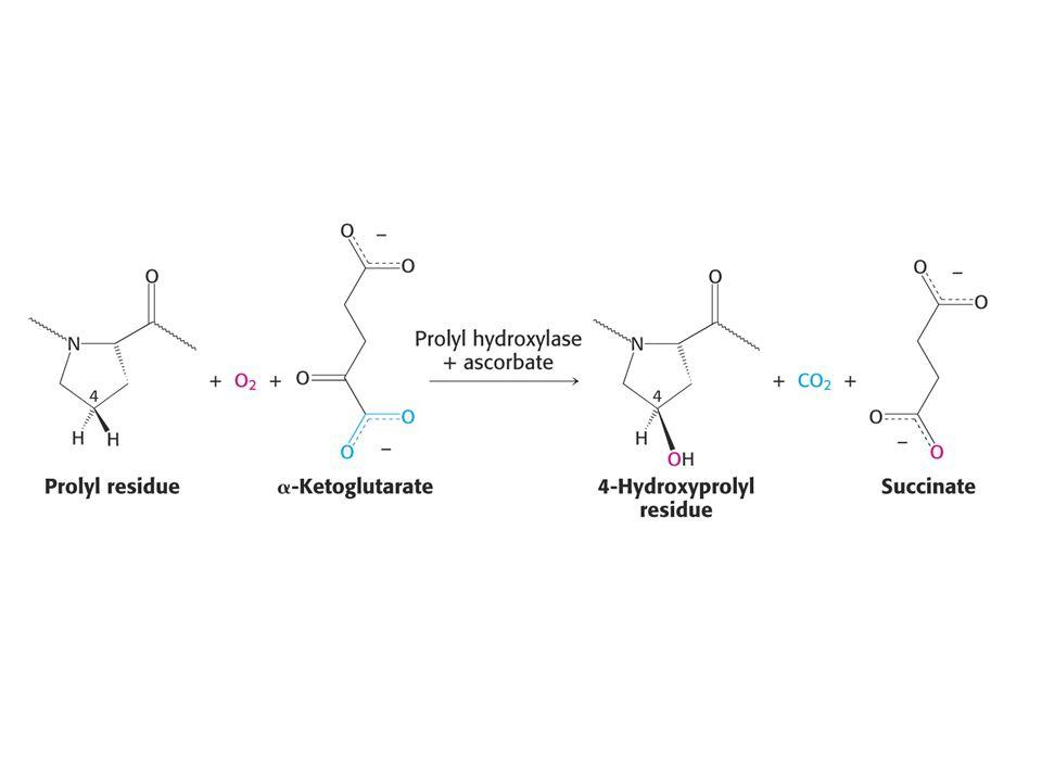 Zsíroldható vitaminok VitaminFunkcióAvitaminózis Retinol (A)A látásban, növekedésben és szaporodásban játszik szerepet Szürkületi vakság, szaruhártya- károsodás, légzési- és gyomor-bél traktus károsodása Kalciferol (D)Kalcium- és foszfátanyagcsere szabályozása Angolkór (rachitis): csontdeformációk, hiányos növekedés, csontlágyulás (felnőtteknél); puha, hajlékony csontok α-Tokoferol (E)AntioxidánsSpermiumtermelés gátlása, sérülések az izmokban és idegekben (ritkán) KVéralvadásBőralatti bevérzések
