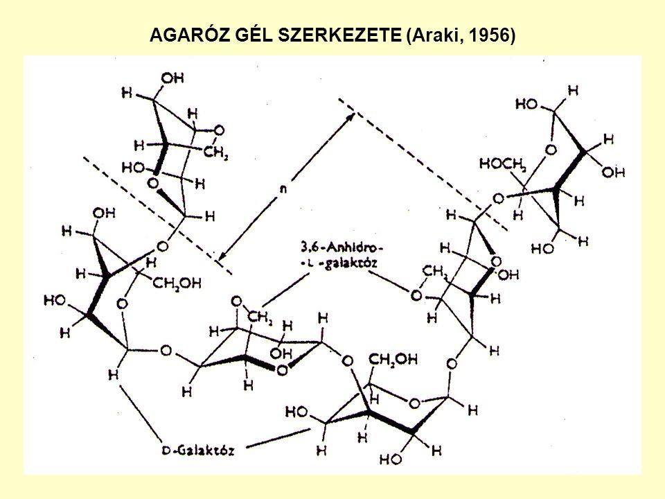 TÉRHÁLÓS DEXTRÁN GÉLEK (Sephadex) SZERKEZETE