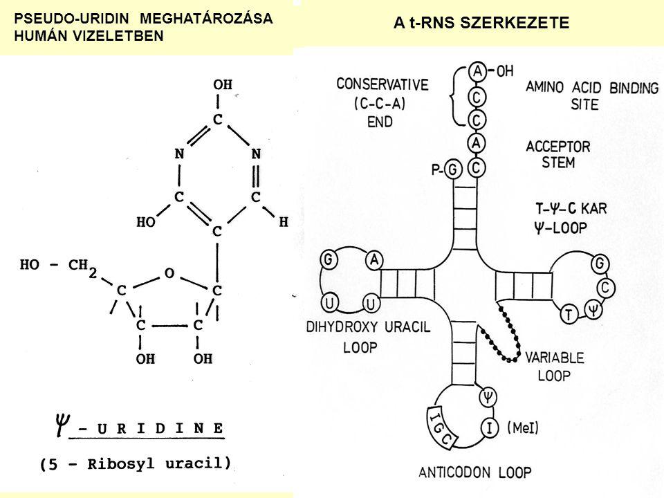 PSEUDO-URIDIN MEGHATÁROZÁSA HUMÁN VIZELETBEN A t-RNS SZERKEZETE