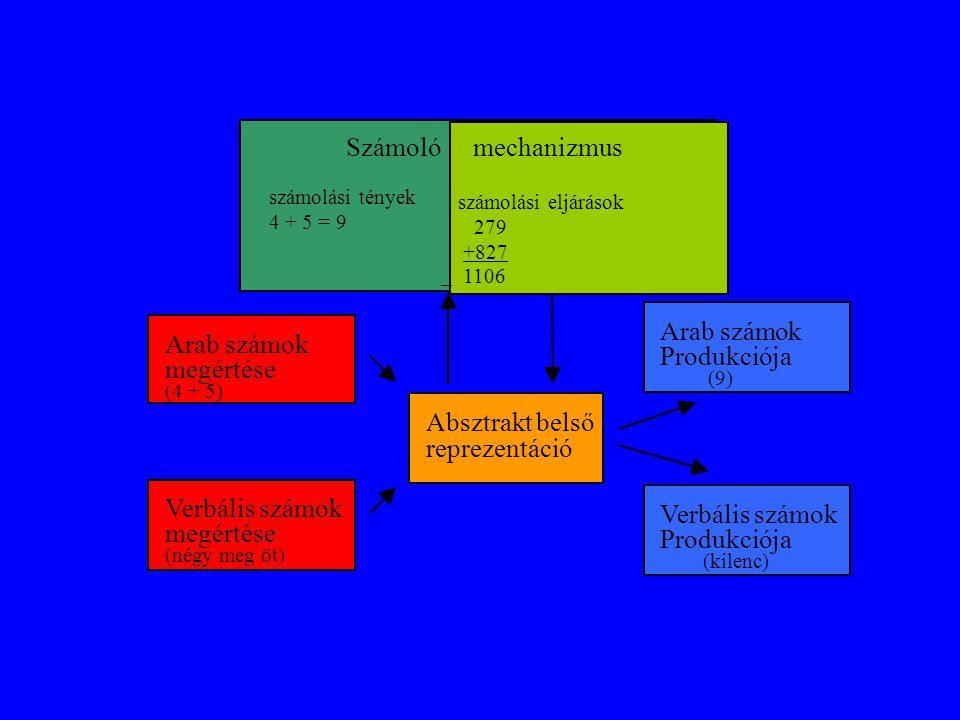 Számoló számolási tények 4 + 5 = 9 Arab számok megértése (4 + 5) Verbális számok megértése (négy meg öt) Absztrakt belső reprezentáció Arab számok Pro