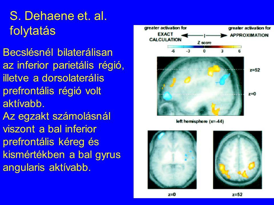 Becslésnél bilaterálisan az inferior parietális régió, illetve a dorsolaterális prefrontális régió volt aktívabb. Az egzakt számolásnál viszont a bal