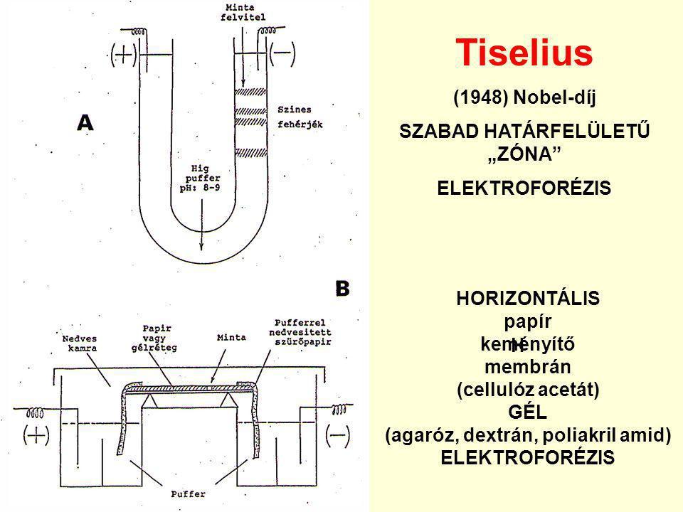 """Tiselius (1948) Nobel-díj SZABAD HATÁRFELÜLETŰ """"ZÓNA"""" ELEKTROFORÉZIS H HORIZONTÁLIS papír keményítő membrán (cellulóz acetát) GÉL (agaróz, dextrán, po"""