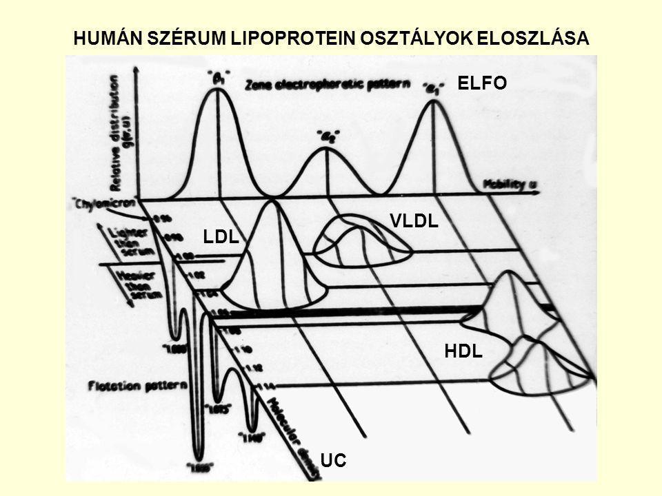 HUMÁN SZÉRUM LIPOPROTEIN OSZTÁLYOK ELOSZLÁSA VLDL LDL HDL ELFO UC