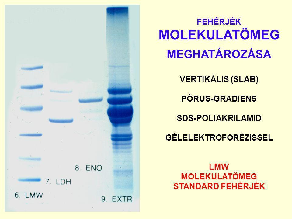 FEHÉRJÉK MOLEKULATÖMEG MEGHATÁROZÁSA VERTIKÁLIS (SLAB) PÓRUS-GRADIENS SDS-POLIAKRILAMID GÉLELEKTROFORÉZISSEL LMW MOLEKULATÖMEG STANDARD FEHÉRJÉK
