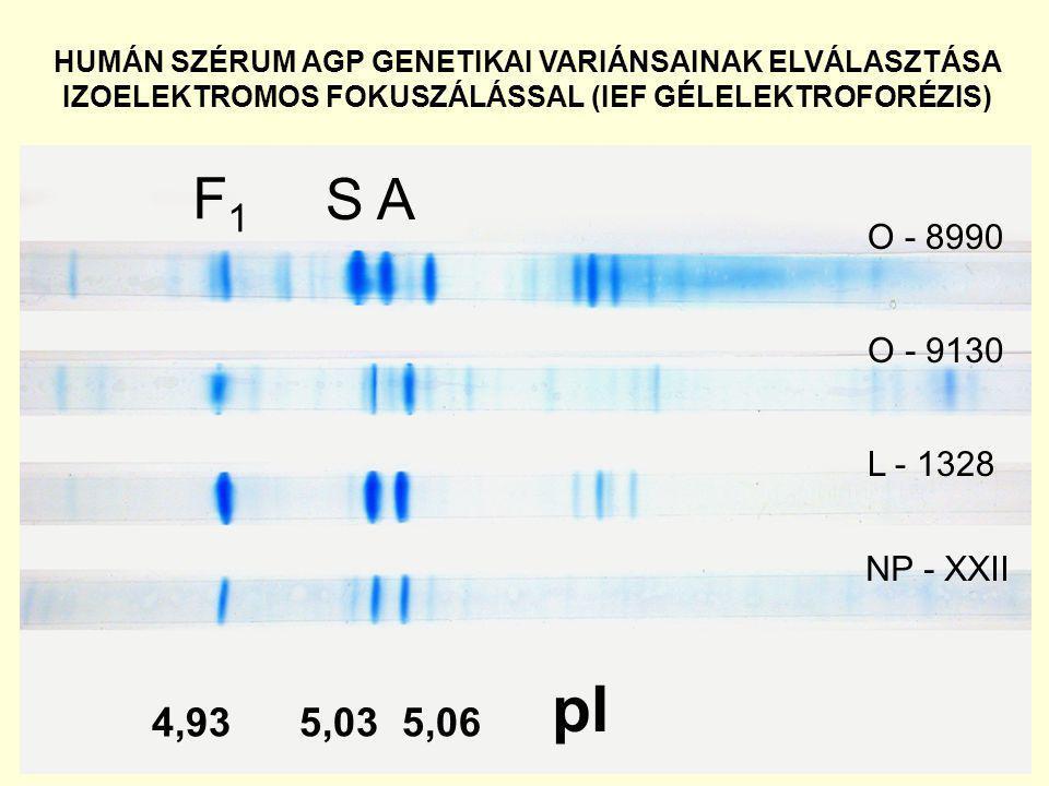 4,93 5,03 5,06 pI F1F1 S A NP - XXII L - 1328 O - 9130 O - 8990 HUMÁN SZÉRUM AGP GENETIKAI VARIÁNSAINAK ELVÁLASZTÁSA IZOELEKTROMOS FOKUSZÁLÁSSAL (IEF