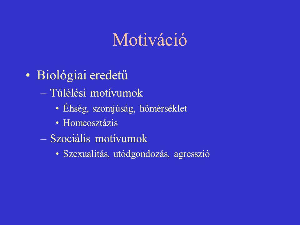 Motiváció Biológiai eredetű –Túlélési motívumok Éhség, szomjúság, hőmérséklet Homeosztázis –Szociális motívumok Szexualitás, utódgondozás, agresszió