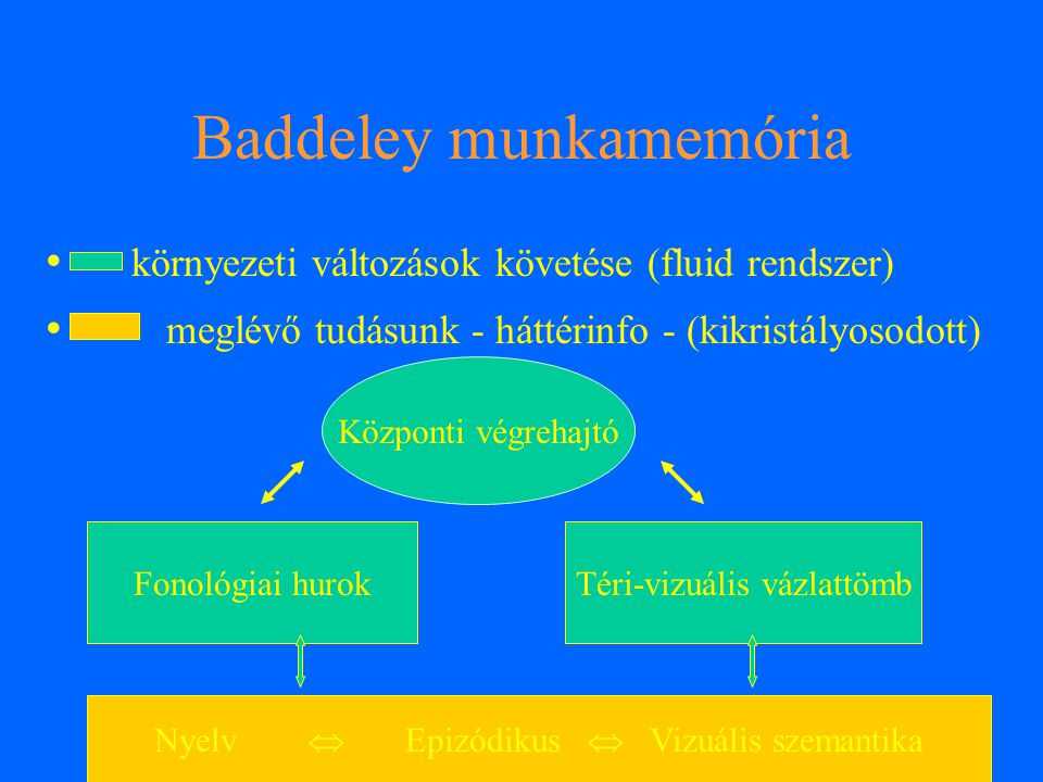 Baddeley munkamemória környezeti változások követése (fluid rendszer) meglévő tudásunk - háttérinfo - (kikristályosodott) Központi végrehajtó Fonológi