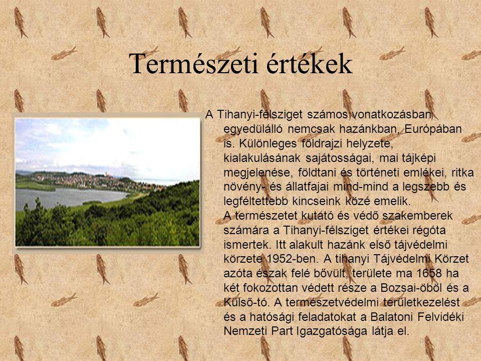 Természeti értékek A Tihanyi-félsziget számos vonatkozásban egyedülálló nemcsak hazánkban, Európában is. Különleges földrajzi helyzete, kialakulásának