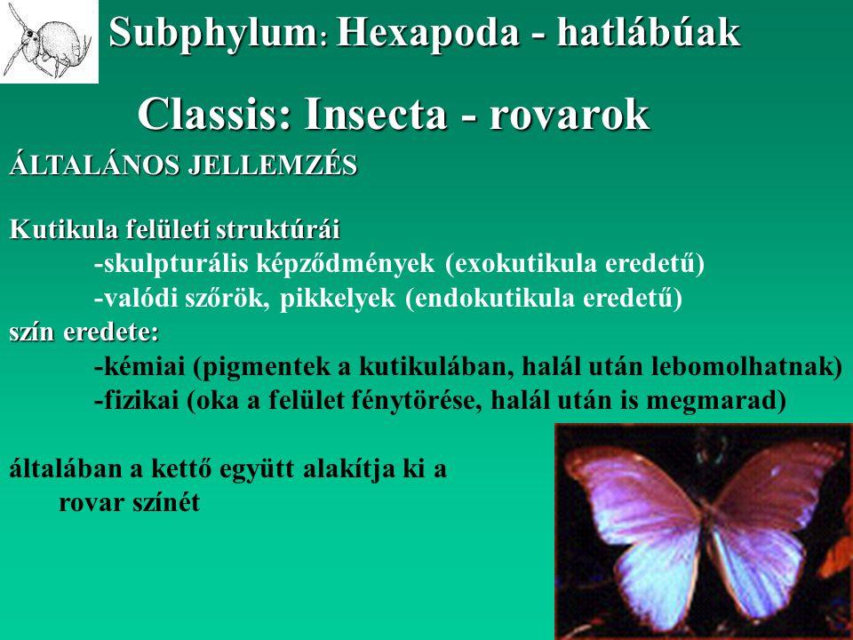 Classis: Insecta - rovarok Subphylum : Hexapoda - hatlábúak ÁLTALÁNOS JELLEMZÉS Kutikula felületi struktúrái -skulpturális képződmények (exokutikula e