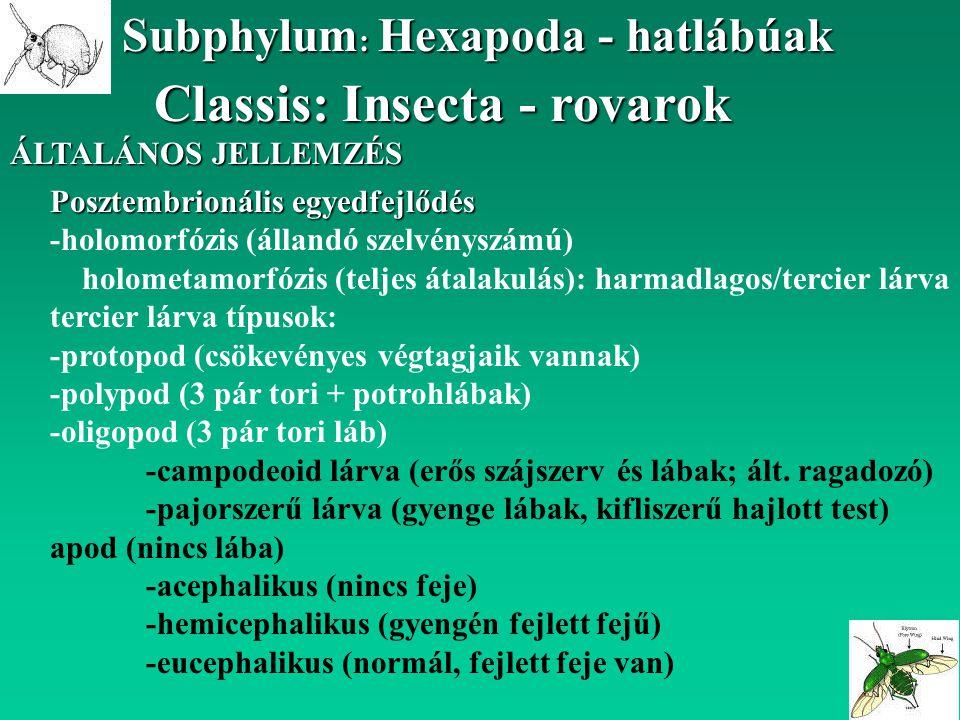 Classis: Insecta - rovarok Subphylum : Hexapoda - hatlábúak ÁLTALÁNOS JELLEMZÉS Posztembrionális egyedfejlődés -holomorfózis (állandó szelvényszámú) h