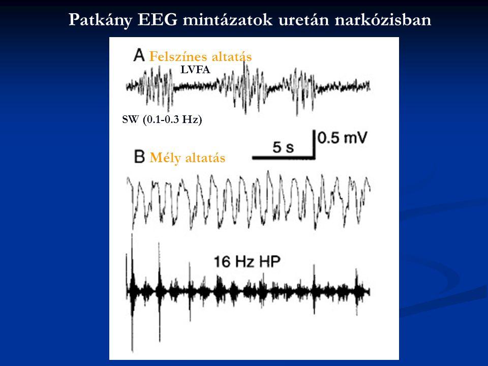 Patkány EEG mintázatok uretán narkózisban SW (0.1-0.3 Hz) LVFA Felszínes altatás Mély altatás