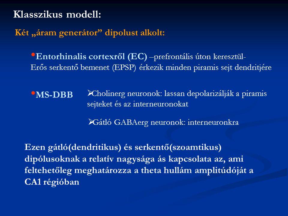 """Klasszikus modell: Két """"áram generátor dipolust alkolt: Entorhinalis cortexről (EC) –prefrontális úton keresztül- Erős serkentő bemenet (EPSP) érkezik minden piramis sejt dendritjére MS-DBB  Cholinerg neuronok: lassan depolarizálják a piramis sejteket és az interneuronokat  Gátló GABAerg neuronok: interneuronkra Ezen gátló(dendritikus) és serkentő(szoamtikus) dipólusoknak a relatív nagysága ás kapcsolata az, ami feltehetőleg meghatározza a theta hullám amplitúdóját a CA1 régióban"""