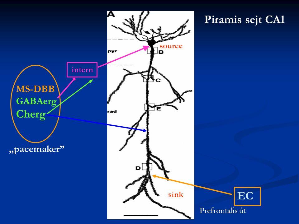 "sink source MS-DBB GABAerg Cherg intern ""pacemaker EC Prefrontalis út Piramis sejt CA1"