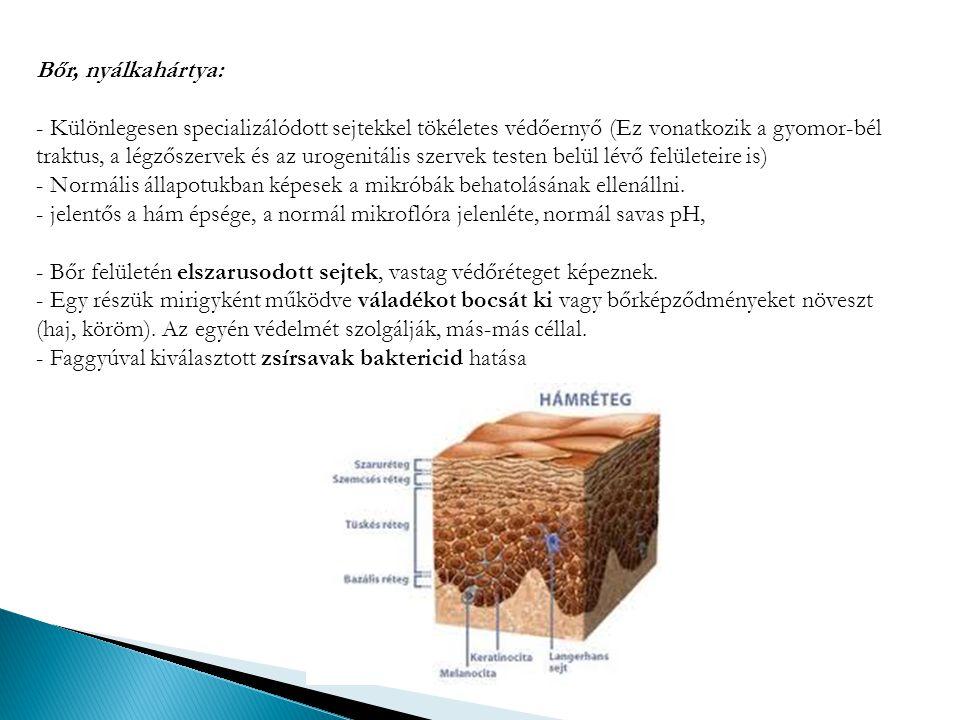 Bőr, nyálkahártya: - Különlegesen specializálódott sejtekkel tökéletes védőernyő (Ez vonatkozik a gyomor-bél traktus, a légzőszervek és az urogenitáli