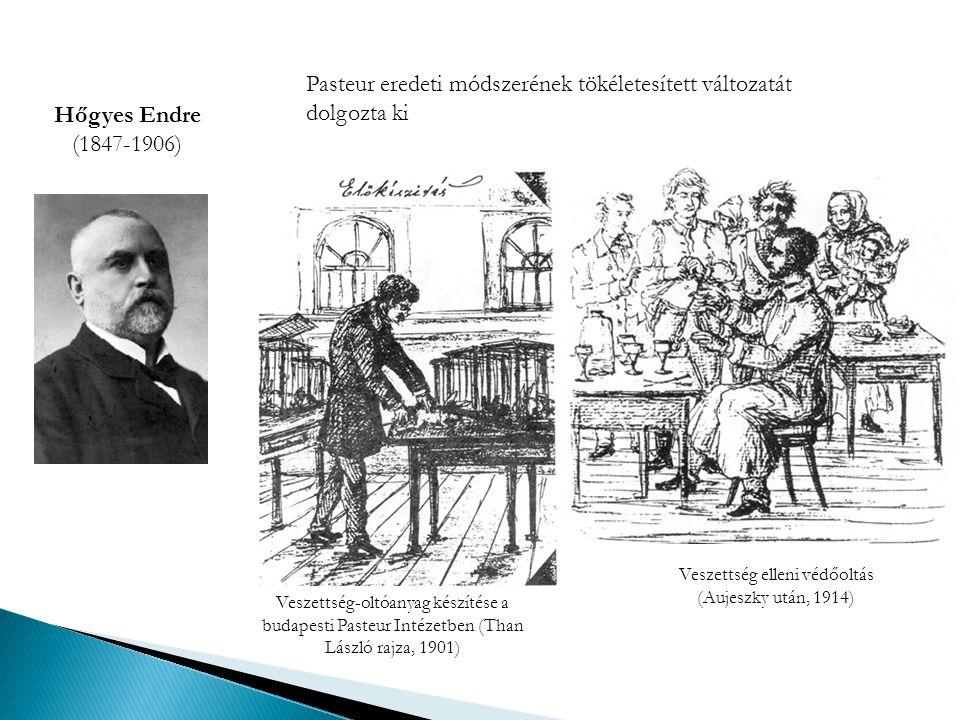 Hőgyes Endre (1847-1906) Veszettség-oltóanyag készítése a budapesti Pasteur Intézetben (Than László rajza, 1901) Veszettség elleni védőoltás (Aujeszky