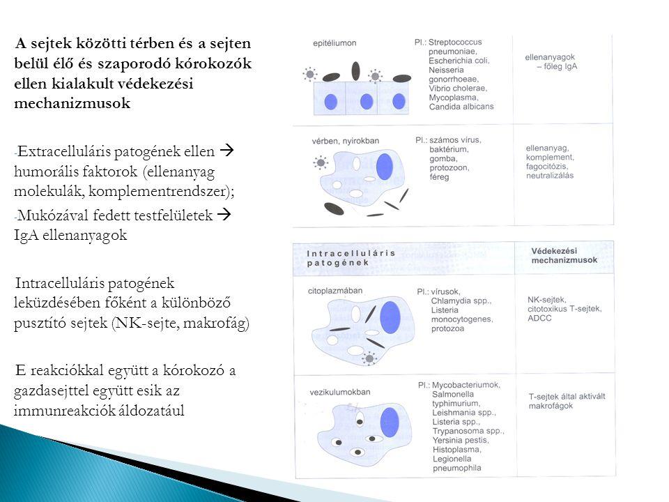 A sejtek közötti térben és a sejten belül élő és szaporodó kórokozók ellen kialakult védekezési mechanizmusok - Extracelluláris patogének ellen  humo