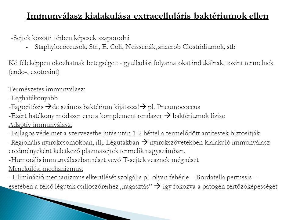 Immunválasz kialakulása extracelluláris baktériumok ellen -Sejtek közötti térben képesek szaporodni -Staphylococcusok, Str., E. Coli, Neisseriák, anae
