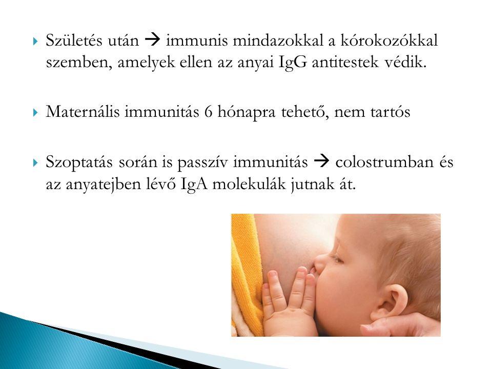  Természetes, aktív immunizálás - Fertőzés kiállása után A passzív vagy aktív immunitás mesterséges létrehozása az immunizálás.