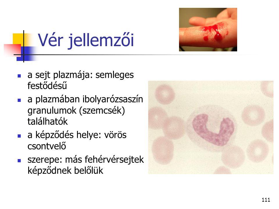 111 Vér jellemzői a sejt plazmája: semleges festődésű a plazmában ibolyarózsaszín granulumok (szemcsék) találhatók a képződés helye: vörös csontvelő s