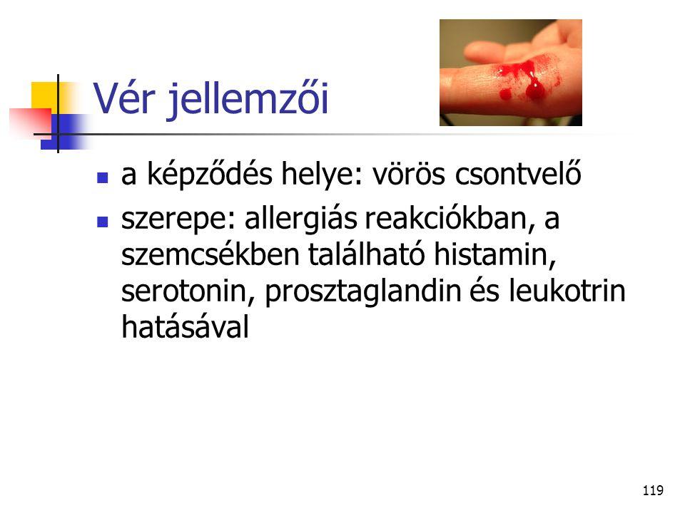 119 Vér jellemzői a képződés helye: vörös csontvelő szerepe: allergiás reakciókban, a szemcsékben található histamin, serotonin, prosztaglandin és leu