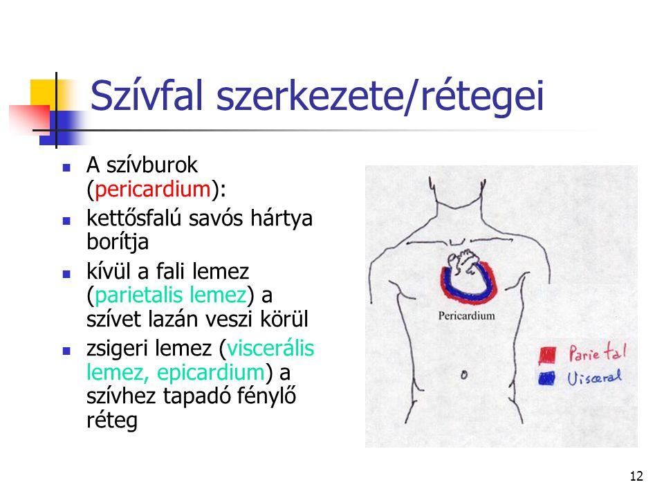 12 Szívfal szerkezete/rétegei A szívburok (pericardium): kettősfalú savós hártya borítja kívül a fali lemez (parietalis lemez) a szívet lazán veszi kö