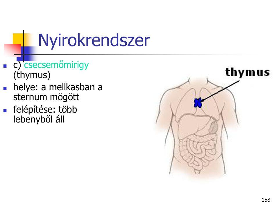 158 Nyirokrendszer c) csecsemőmirigy (thymus) helye: a mellkasban a sternum mögött felépítése: több lebenyből áll