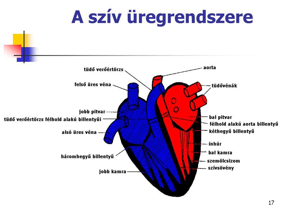 17 A szív üregrendszere