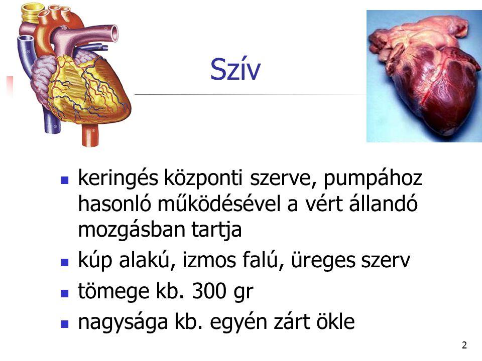 2 Szív keringés központi szerve, pumpához hasonló működésével a vért állandó mozgásban tartja kúp alakú, izmos falú, üreges szerv tömege kb. 300 gr na