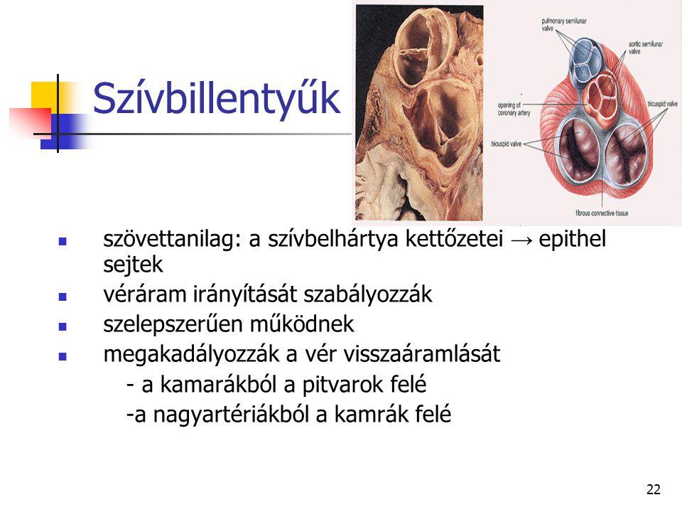 22 Szívbillentyűk szövettanilag: a szívbelhártya kettőzetei → epithel sejtek véráram irányítását szabályozzák szelepszerűen működnek megakadályozzák a