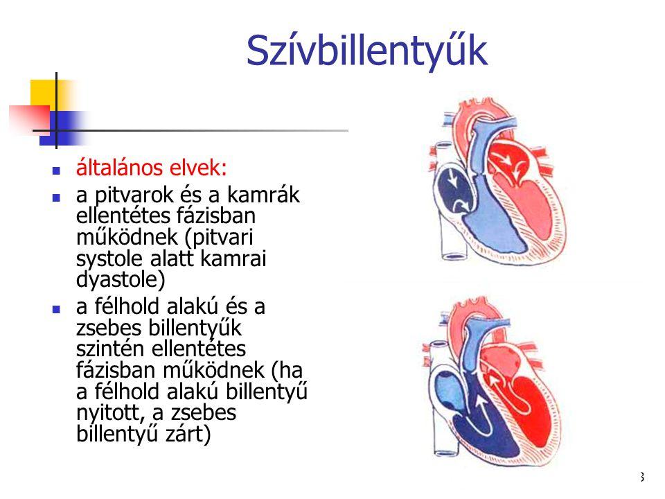 28 Szívbillentyűk általános elvek: a pitvarok és a kamrák ellentétes fázisban működnek (pitvari systole alatt kamrai dyastole) a félhold alakú és a zs