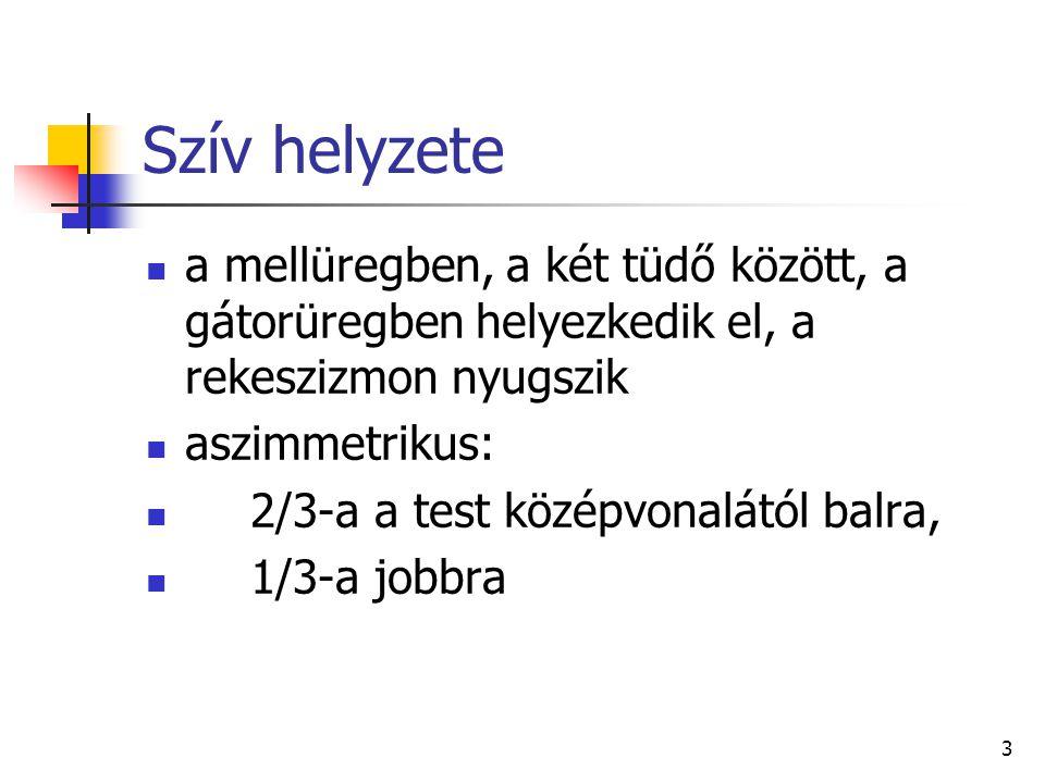 74 A nagyvérkör főbb artériái b) hasi aortaszakasz (aorta abdominalis) b/1) páros aorta ágak: jobb és bal oldali mellékvese verőér (arteria suprarenális dextra et sinistra) jobb és bal oldali vese verőér (arteria renális dextra et sinistra) jobb és bal oldali petefészek verőér (arteria ovarica dextra et sinistra) vagy/seu jobb és bal oldali here verőér (arteria testicularis dextra et sinistra)