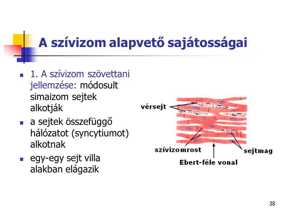 38 A szívizom alapvető sajátosságai 1. A szívizom szövettani jellemzése: módosult simaizom sejtek alkotják a sejtek összefüggő hálózatot (syncytiumot)