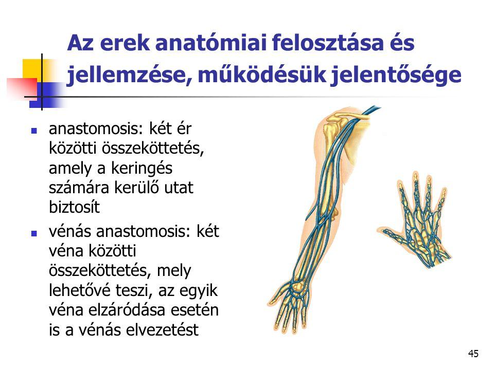 45 Az erek anatómiai felosztása és jellemzése, működésük jelentősége anastomosis: két ér közötti összeköttetés, amely a keringés számára kerülő utat b