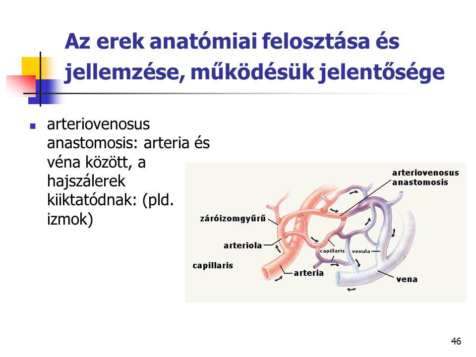 46 Az erek anatómiai felosztása és jellemzése, működésük jelentősége arteriovenosus anastomosis: arteria és véna között, a hajszálerek kiiktatódnak: (