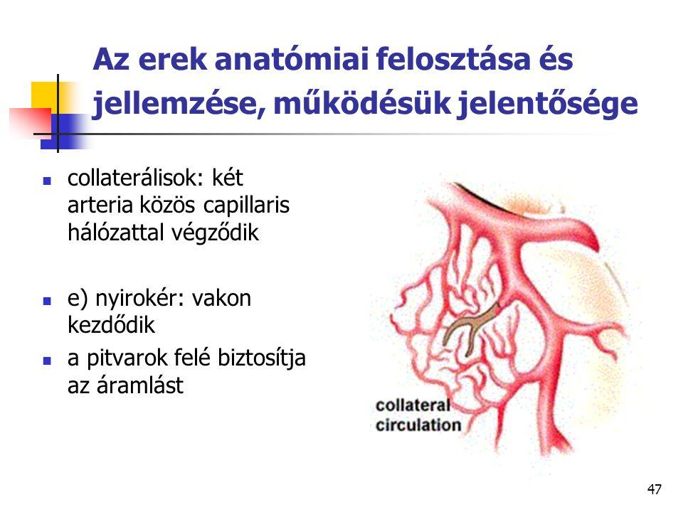 47 Az erek anatómiai felosztása és jellemzése, működésük jelentősége collaterálisok: két arteria közös capillaris hálózattal végződik e) nyirokér: vak