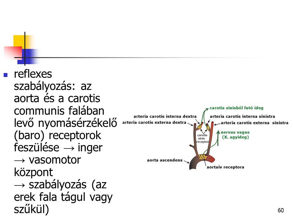 60 reflexes szabályozás: az aorta és a carotis communis falában levő nyomásérzékelő (baro) receptorok feszülése → inger → vasomotor központ → szabályo