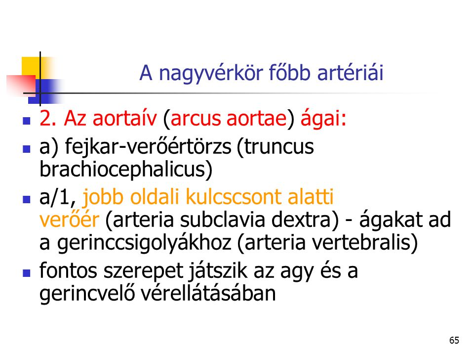 65 A nagyvérkör főbb artériái 2. Az aortaív (arcus aortae) ágai: a) fejkar-verőértörzs (truncus brachiocephalicus) a/1, jobb oldali kulcscsont alatti
