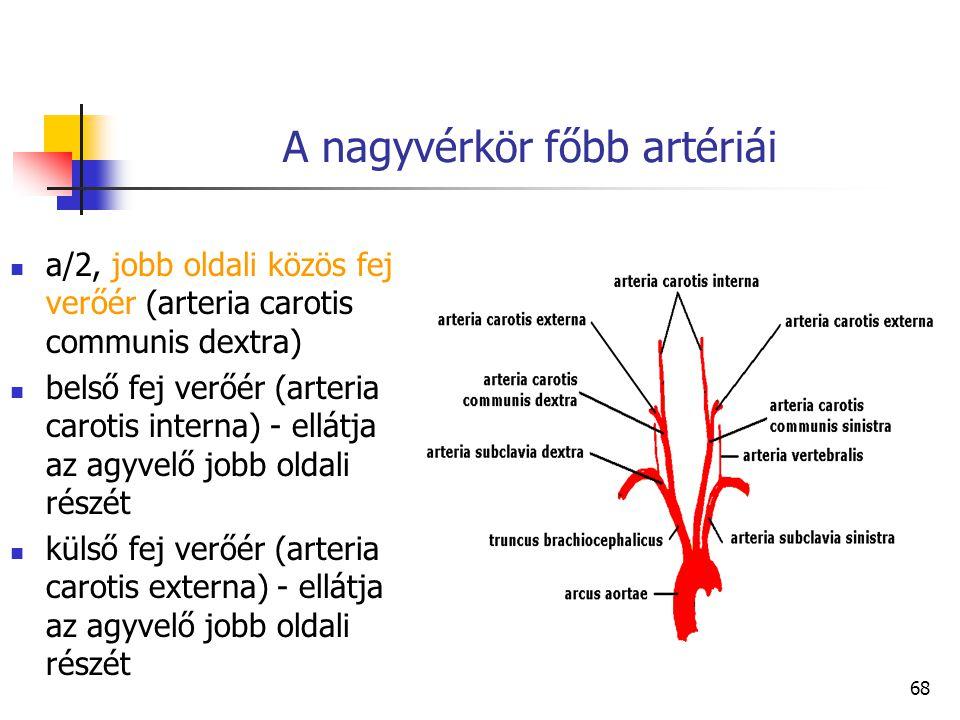 68 A nagyvérkör főbb artériái a/2, jobb oldali közös fej verőér (arteria carotis communis dextra) belső fej verőér (arteria carotis interna) - ellátja