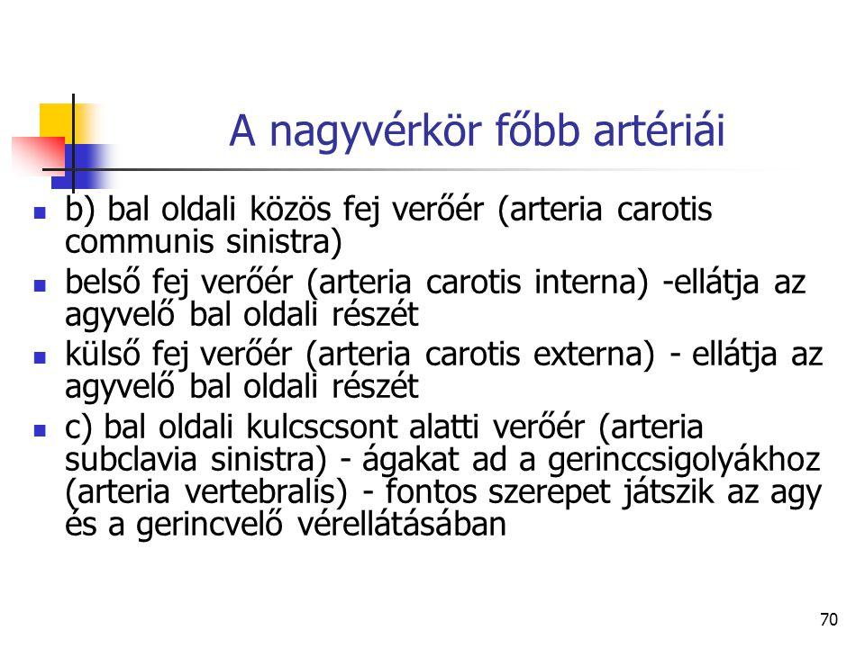70 A nagyvérkör főbb artériái b) bal oldali közös fej verőér (arteria carotis communis sinistra) belső fej verőér (arteria carotis interna) -ellátja a