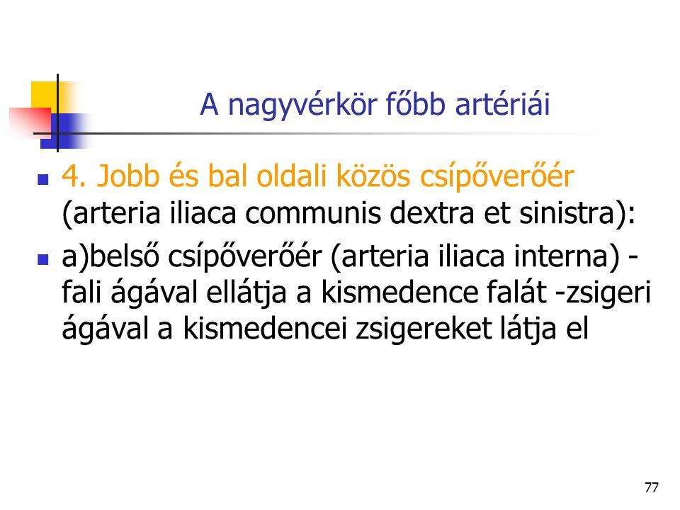 77 A nagyvérkör főbb artériái 4. Jobb és bal oldali közös csípőverőér (arteria iliaca communis dextra et sinistra): a)belső csípőverőér (arteria iliac
